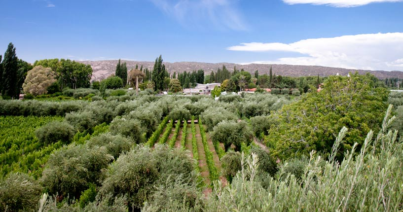 Domaine Saint Diego Maipu Mendoza the tintos private wine tour, winemaker tour, wine tasting