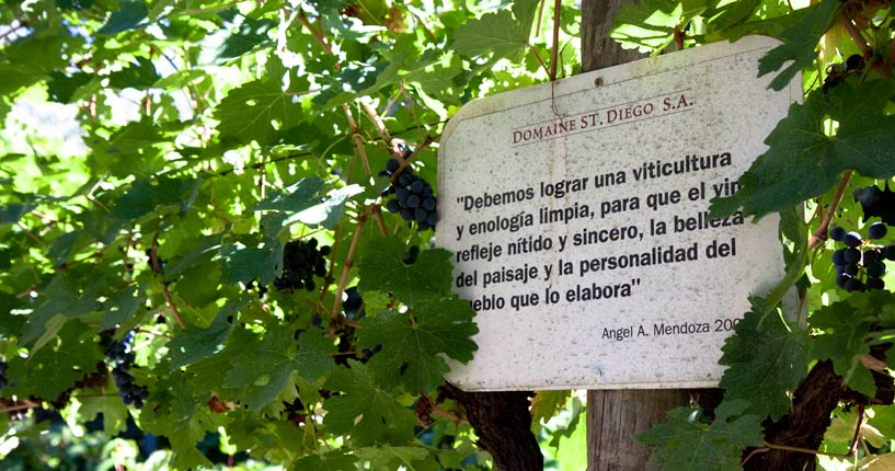 Domaine Saint Diego Maipu Mendoza the tintos private wine tour, winemaker tour, wine tasting