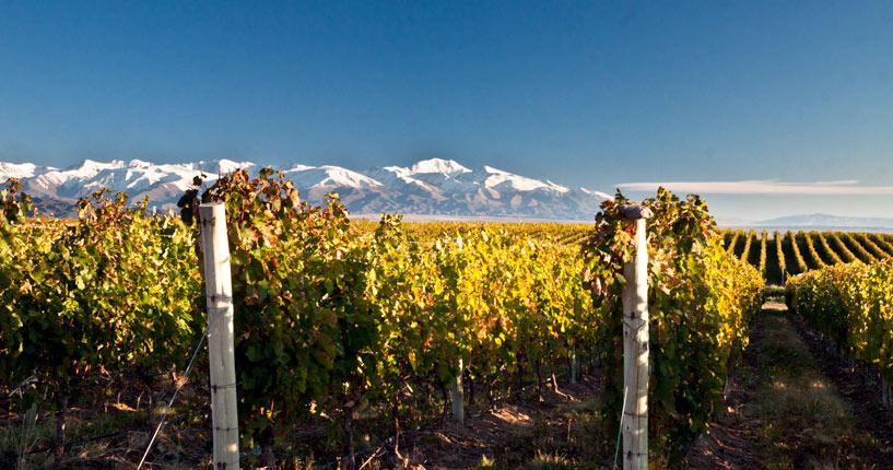 vineyards uco valley