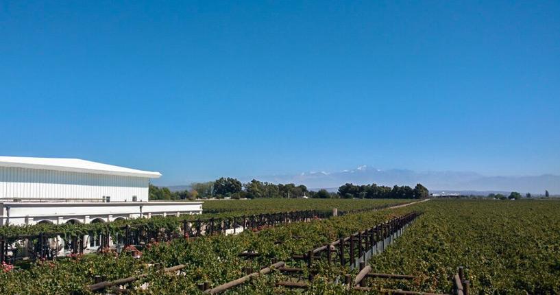 The Tintos Mendoza wine tour maipu lujan de cuyo carinae pulmary finca agostino, mendoza, wine tour mendoza, routes des vins, visite de caves, vignerons indépendants, vignerons, lujan de cuyo, maipu